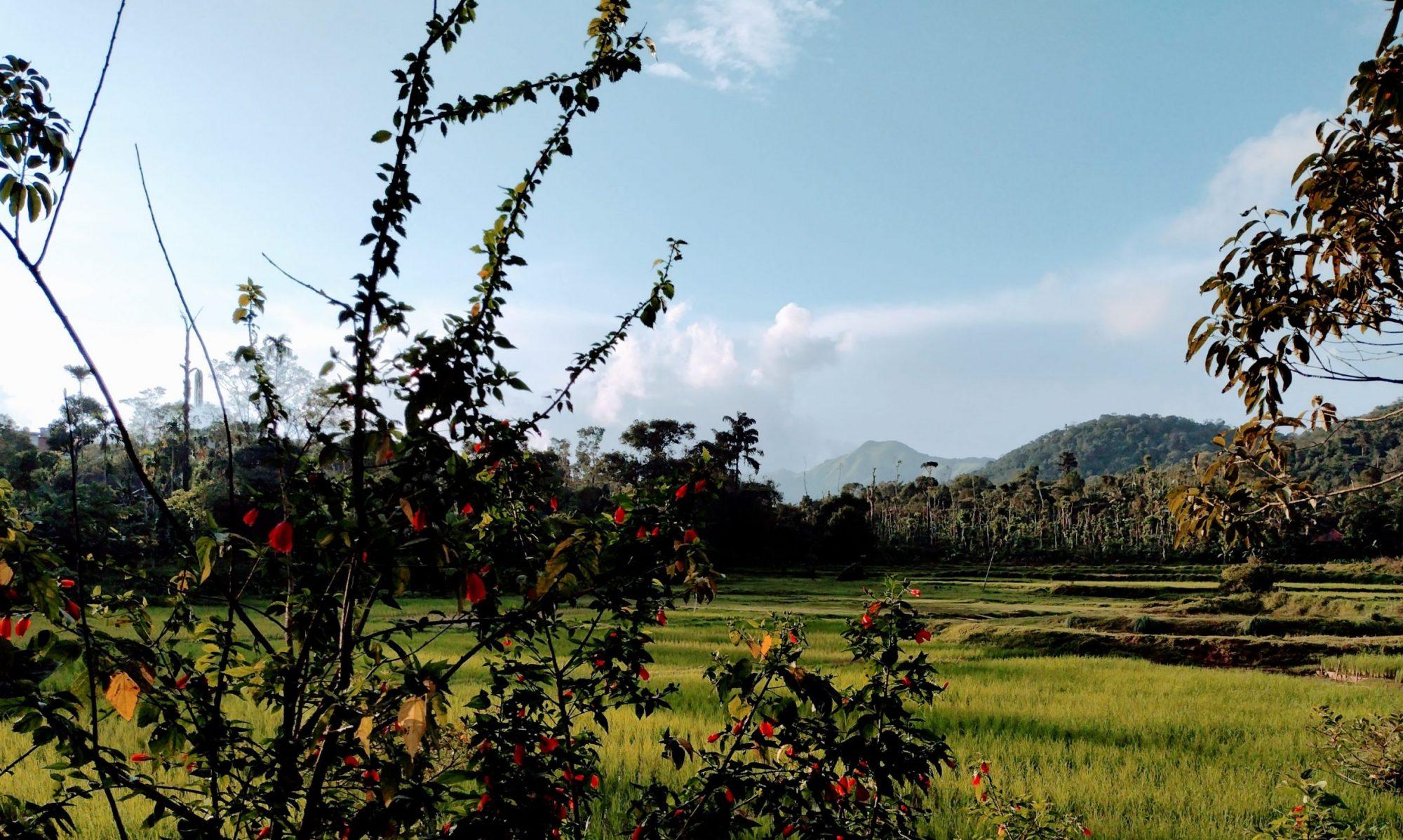 The Linger Farm, Chettimani